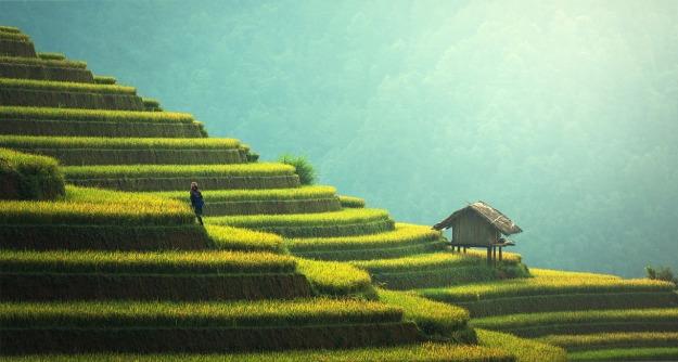 agriculture-1807581_1280.jpg